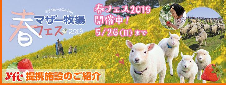 マザー牧場春フェス2019