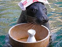 フ箱根園水族館
